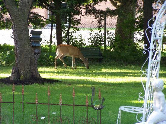 Ophelia's Garden Inn: Deer are regular visitors