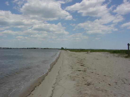 Cattus Island County Park: The beach at the end of the road.