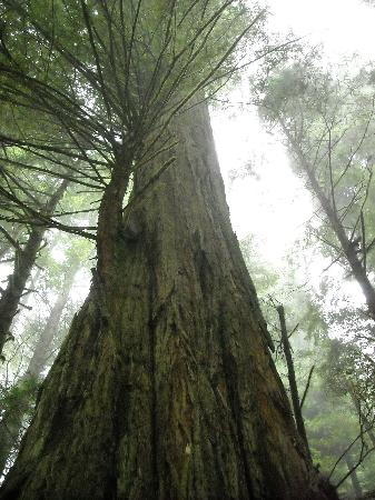 Redwood National Park: How tall can you go!