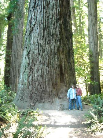 Redwood National Park: I felt like an ant!