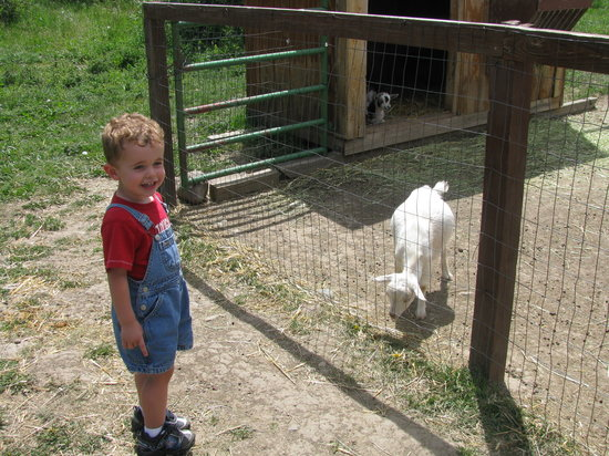 Winding River Resort Stables: one of the animals at the petting farm
