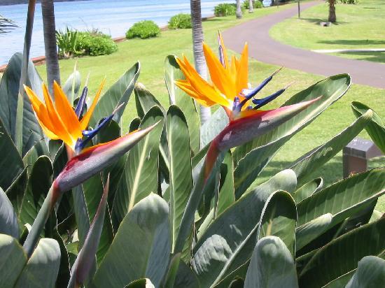 Hale Koa Hotel: Birds of Paradise