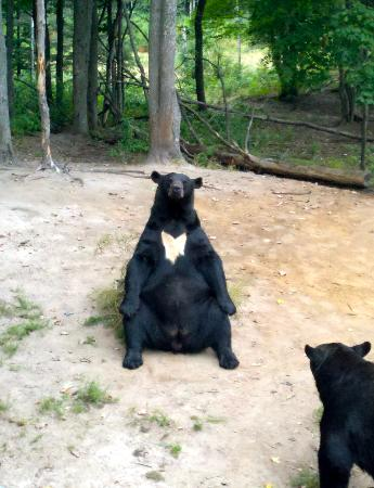 Oswald's Bear Ranch: This bear was such a ham, posing for the picture.