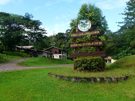 Lahad Datu, Malaysia: 100m on and you're into some good forest.