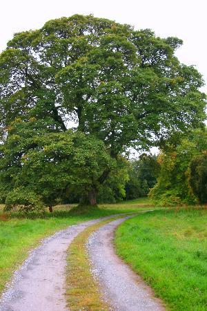Ballinderry Park: More driveway views