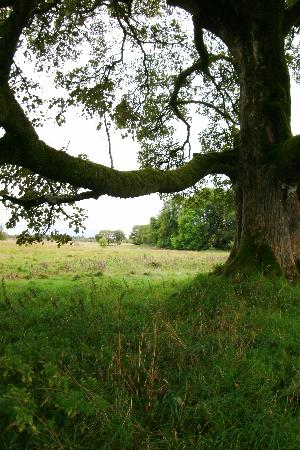 Ballinderry Park: Out to the front yard