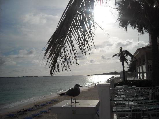 Hotel Riu Palace Paradise Island: just paradise