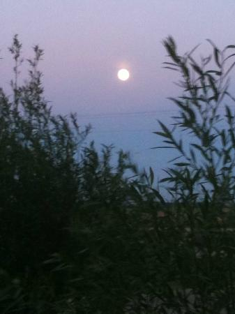 Rubber Ducky Resort and Campground: Full moon over the willows.