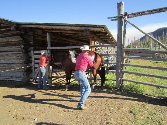 T Cross Ranch: Branding a horse