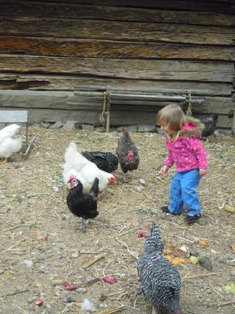Clear Creek History Park: Laughing at the Chickens at Clear Creek Park