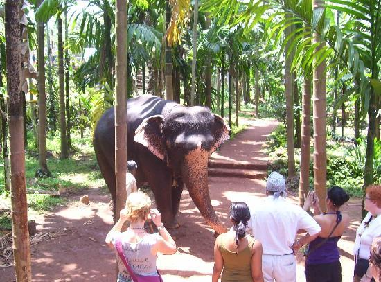 Ponda, India: Sahakari Spice Farm - Elephant