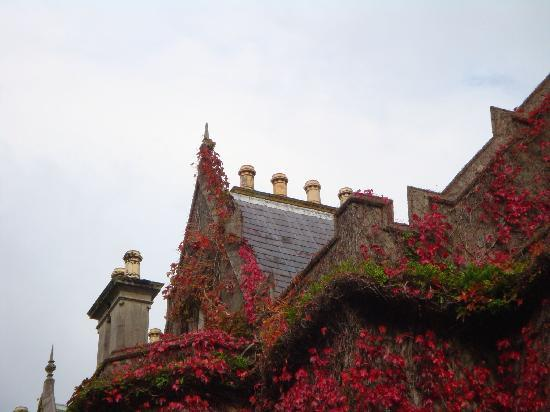 Muckross Abbey: Lots of colour in early October
