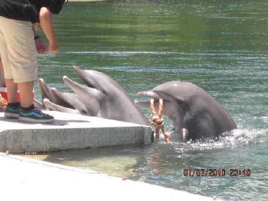 The Kahala Hotel & Resort: Dolphins