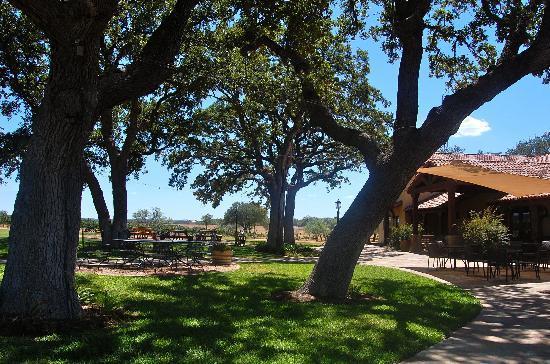 เฟรเดอริคเบิร์ก, เท็กซัส: Oak trees provide shade for leisurely enjoyment of wine and conversation.