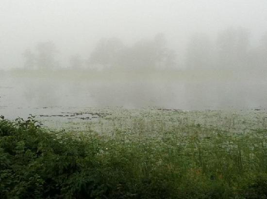Madden's on Gull Lake: Foggy Morning