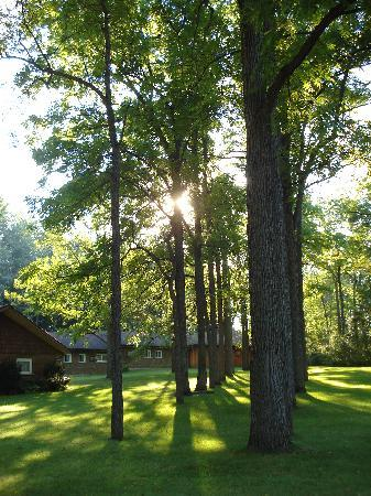 Forest Motel & Woodland Retreat: Gem in the Woods