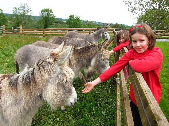 Clondanagh Cottage: All lined up for a pat!