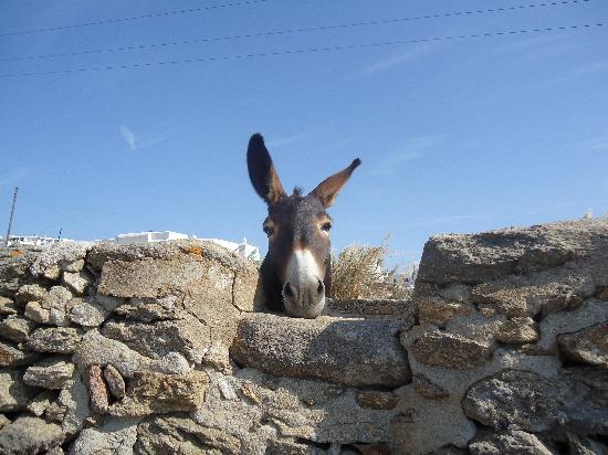 Villa Konstantin: donkey