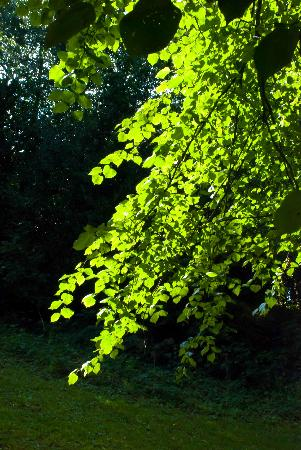 Brandon Hill Nature Park: Awesome sunshine