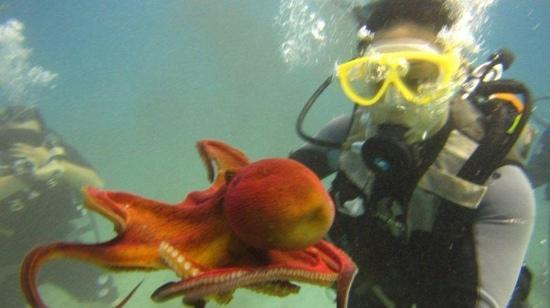 Oahu Diving: octo!!