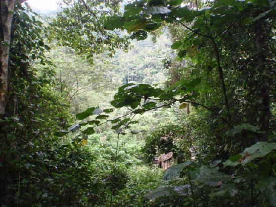 The Buhoma Community Rest Camp: View from my tent