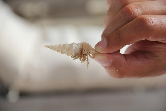 Gili Lankanfushi: crab