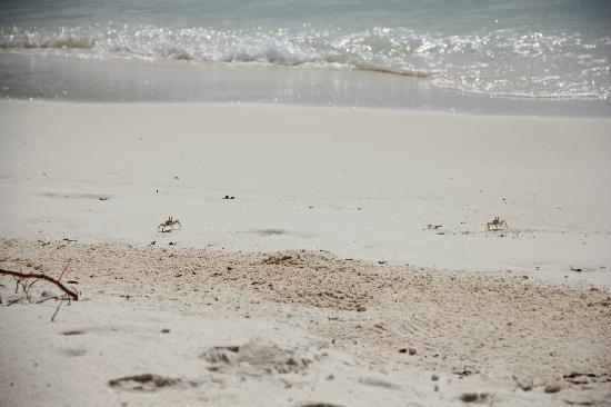 Gili Lankanfushi: beach