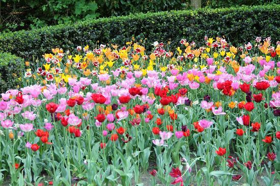 Efteling: tulips in the spring