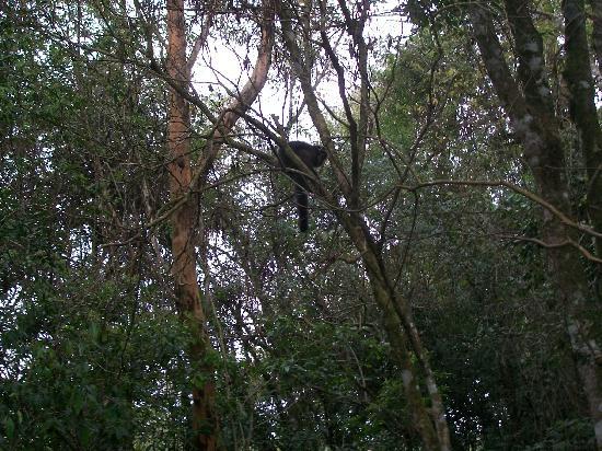 Foto De Cataratas Del Iguaz 250 Parque Nacional Iguaz 250