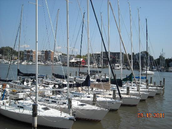 Westin Annapolis: Marina