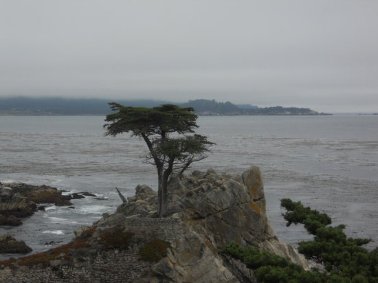 Pebble Beach, Kalifornia: lone cypress