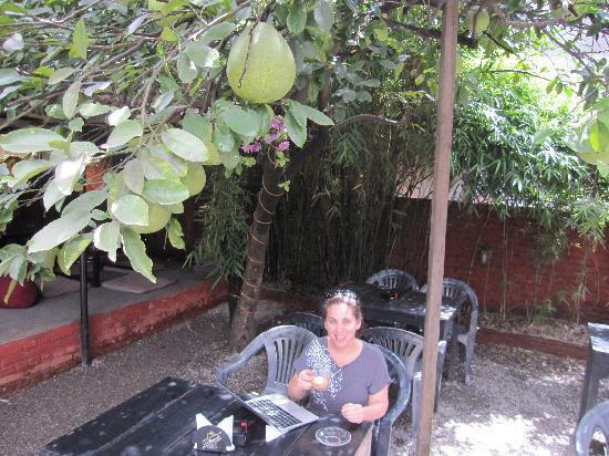 Funky Buddha Kathmandu : sitting under grapefruit tree