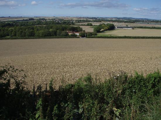 Cashmoor Inn: Grain fields near Cashmoor