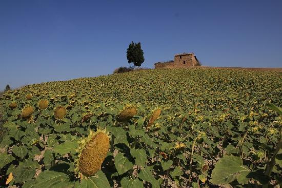 Arca di Pienza 사진