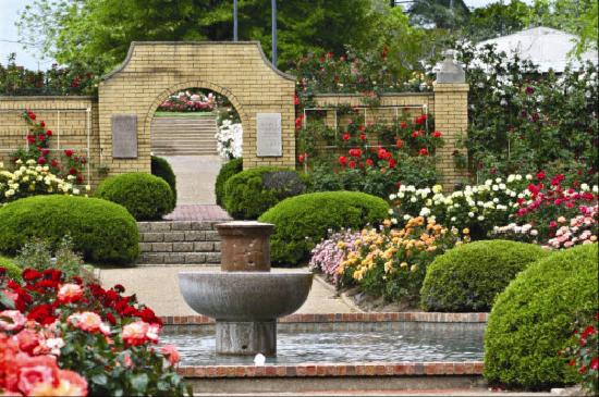 Roses In Garden: Featured Images Of Tyler, TX