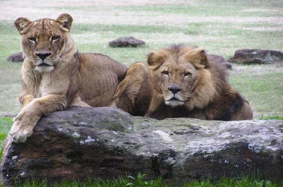 Tyler, TX: Caldwell Zoo