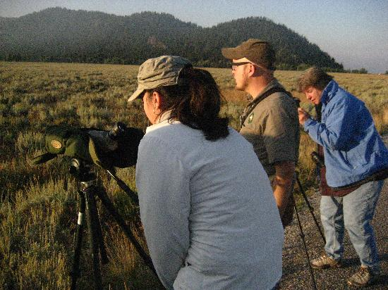 Wildlife Expeditions of Teton Science Schools: Viewing moose with viewing scopes