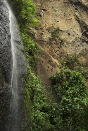 Refugio De Vida Silvestre Chocoyero-El Brujo Day Tours