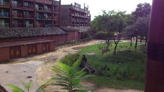 Disney's Animal Kingdom Lodge: View from the room on arrival