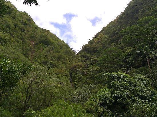Manoa Falls: The falls at a distance