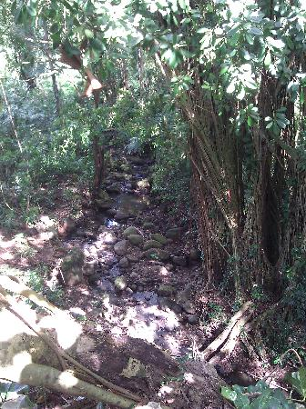 Manoa Falls: The creek bed
