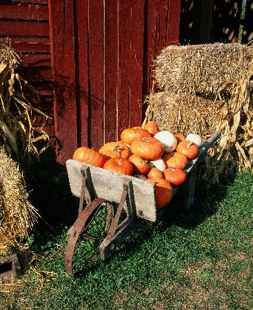 Hood River, Oregón: Pumpkin Harvest