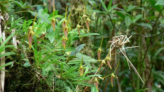 Kiri Mountain Lodge: El lugar es fabuloso para admirar orquídeas