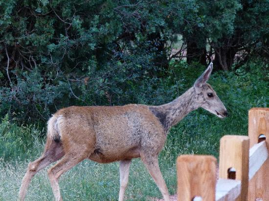 อุทยานแห่งทวยเทพ: oh deer me.