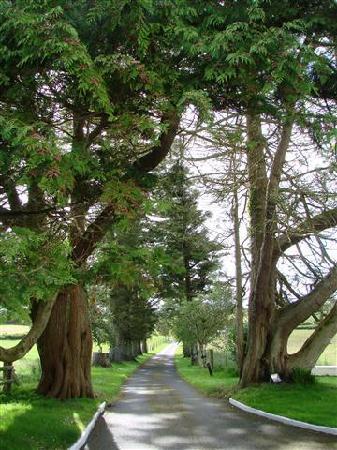 Kilmurray House: The driveway