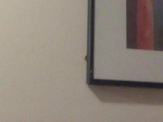 Knights Inn Columbia Airport/Cayce : roaches!