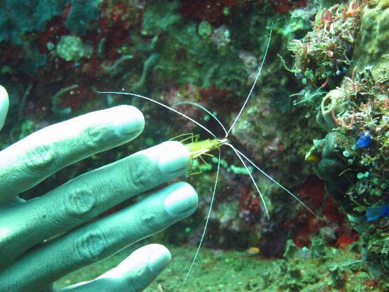 Amed Scuba Tauchzentrum: Sea creatures big and small