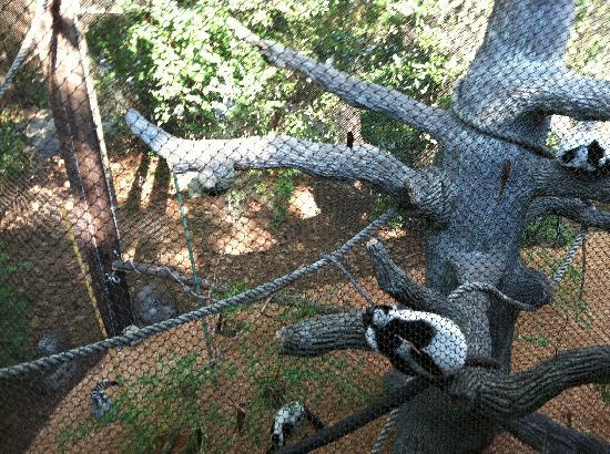 Zoo Atlanta: zoo scene