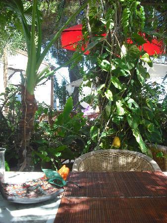 Hostal Buenavista: the gardens
