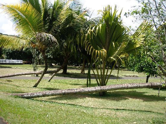 SSR Botanic Garden: Trees